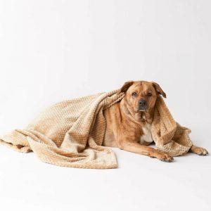 Microfiber Pet Blanket – 36 x 54 Taupe